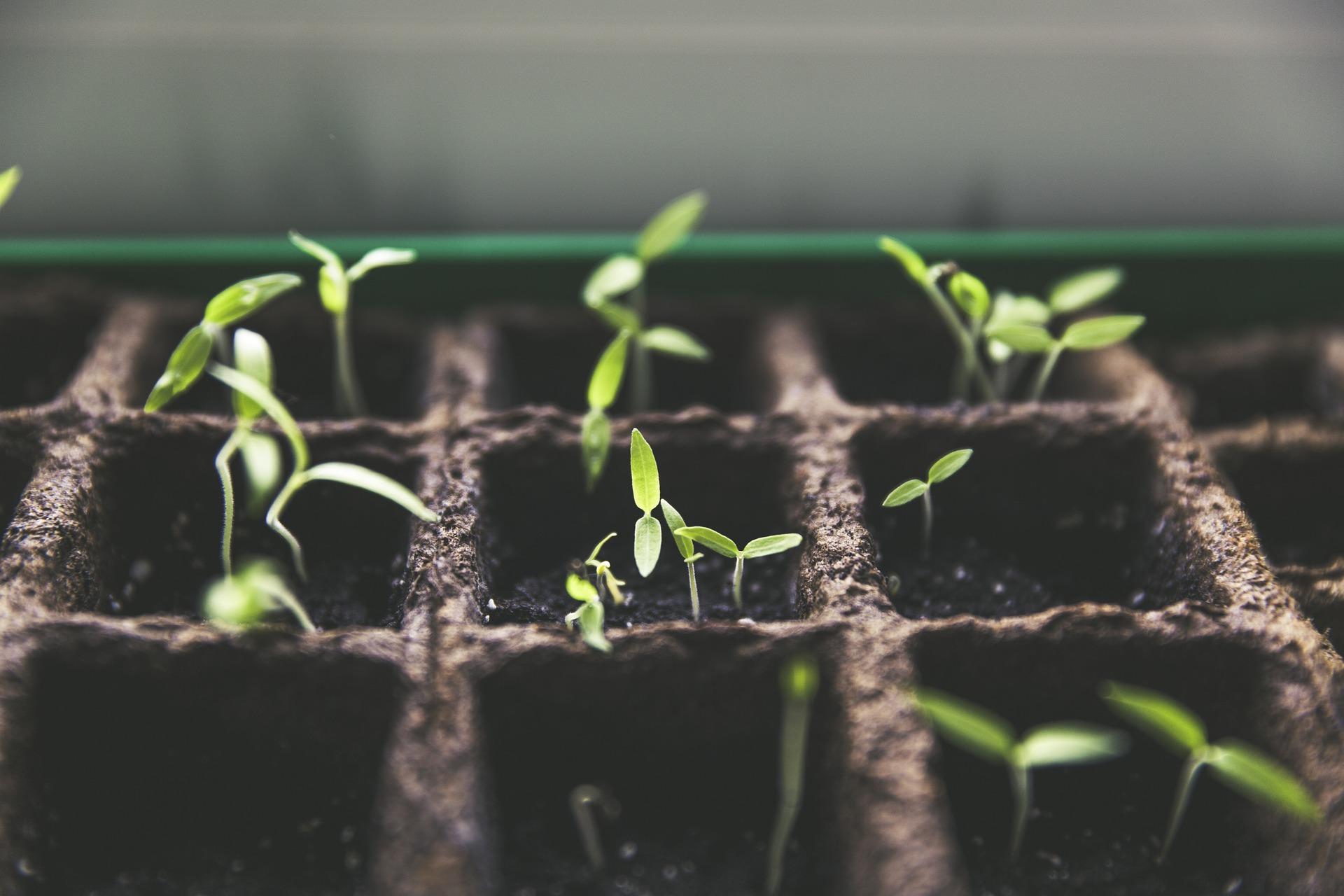 amala crea seguimiento cultivo compartido