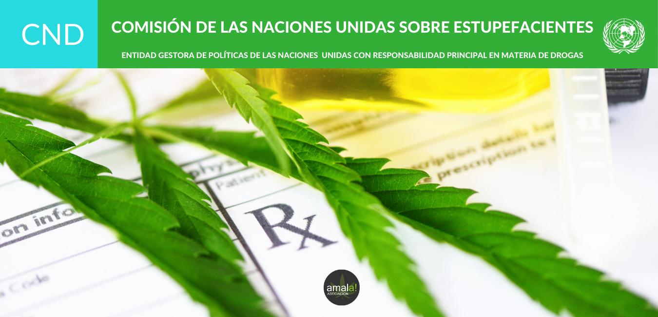 La ONU @cnd__unodc reconoce oficialmente las propiedades medicinales del cannabis